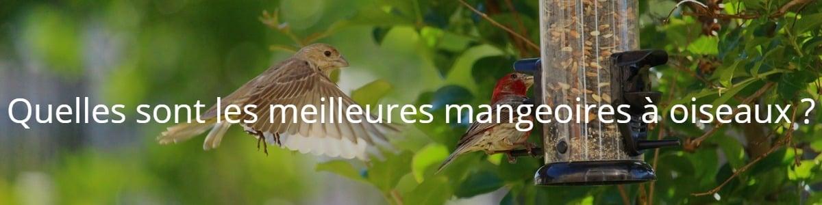 Quelles sont les meilleures mangeoires à oiseaux ?